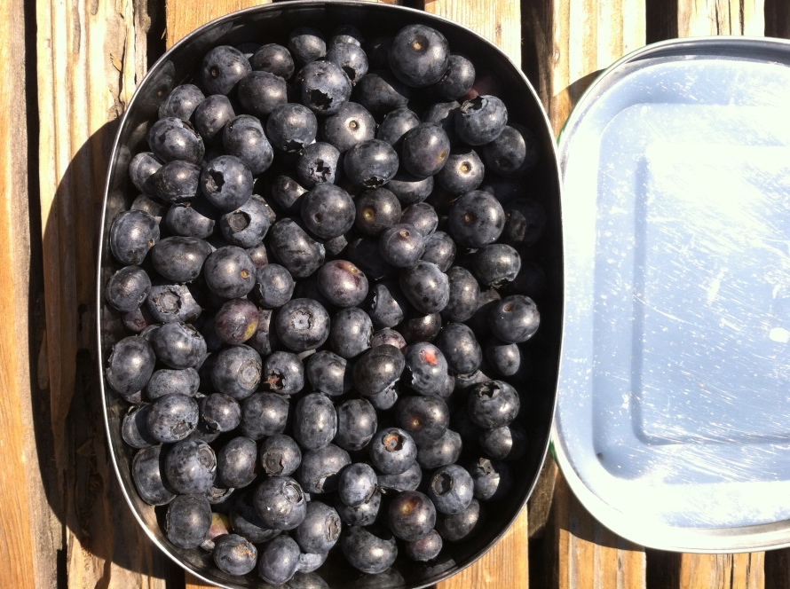 loose blueberries 10.27.39