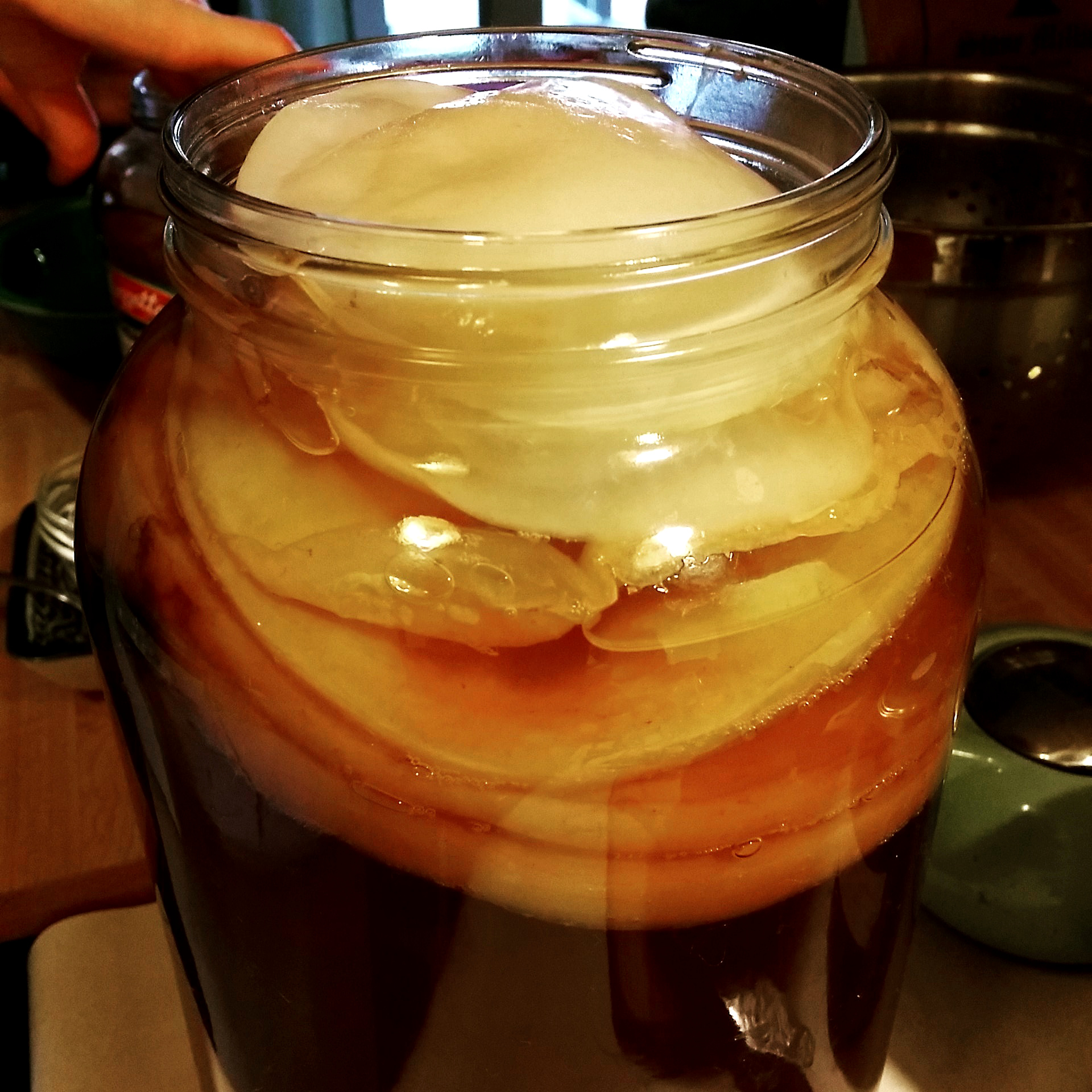 How To Make Your Own Kombucha Scoby  Kitchn