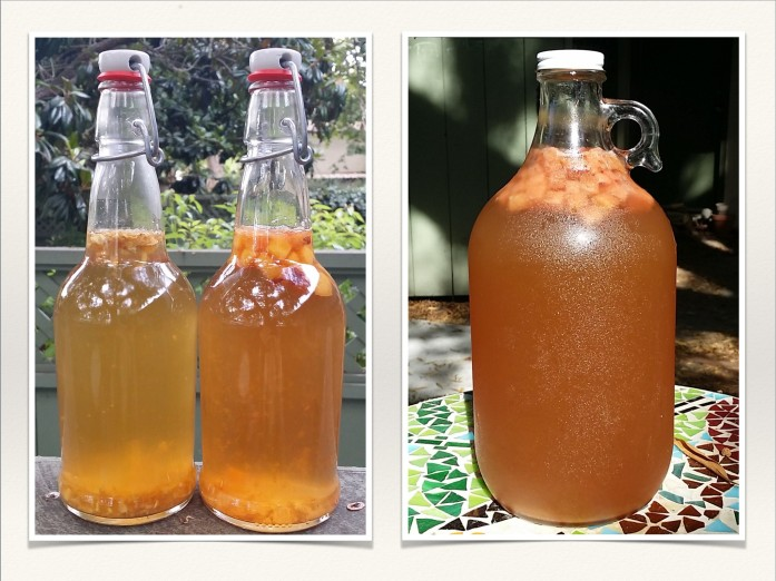 fermentation slide 11