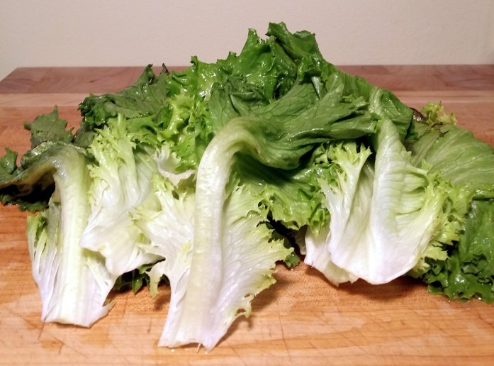 revived lettuce